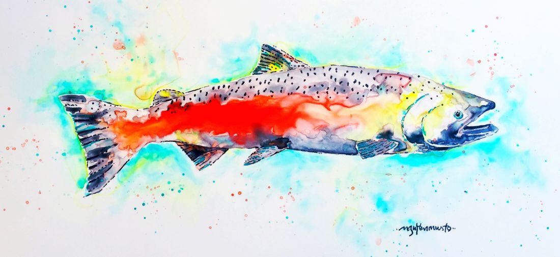 chinook-salmon