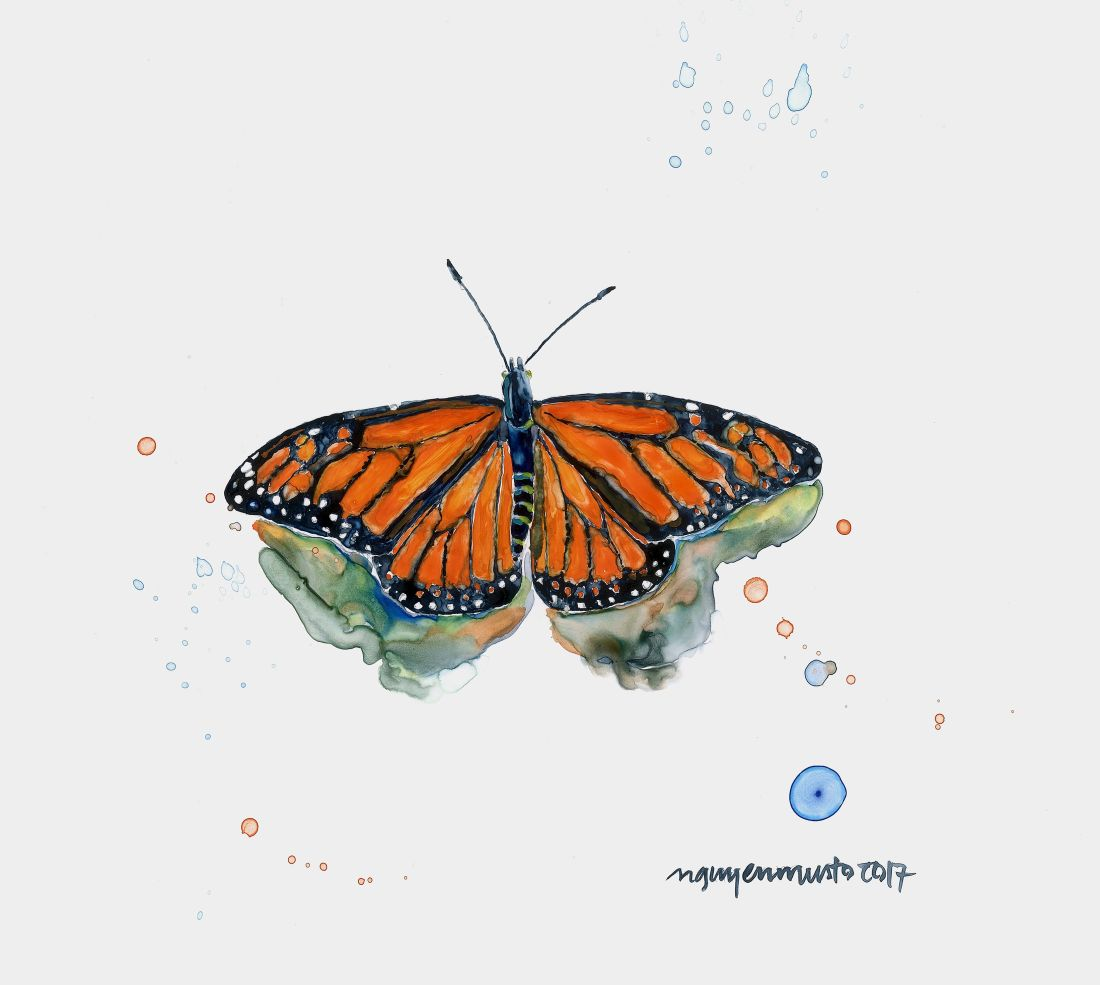 CNM-0817-07_Monarch